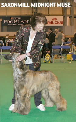 Saxonmill Midnight Muse Best Puppy crufts 2010